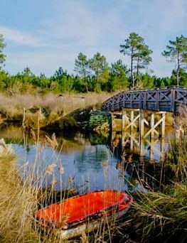 camping nature arcachon